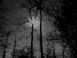 Tiempos oscuros